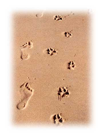 Human and dog footprints in sand